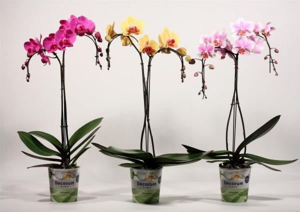 Za svaki dom: Osim što su divan ukras, ove biljke privući će i pozitivnu energiju