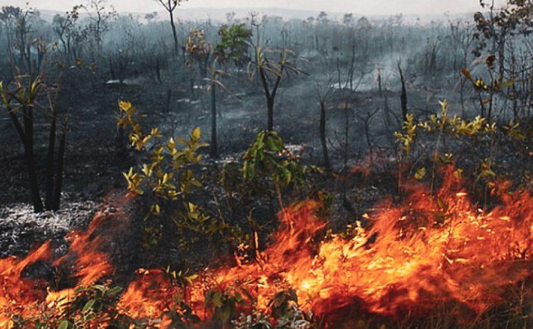 Šta već danas možete uraditi povodom činjenice da gori šuma Amazonije?